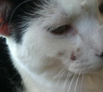 Dog Scratching No Fleas Home Remedy